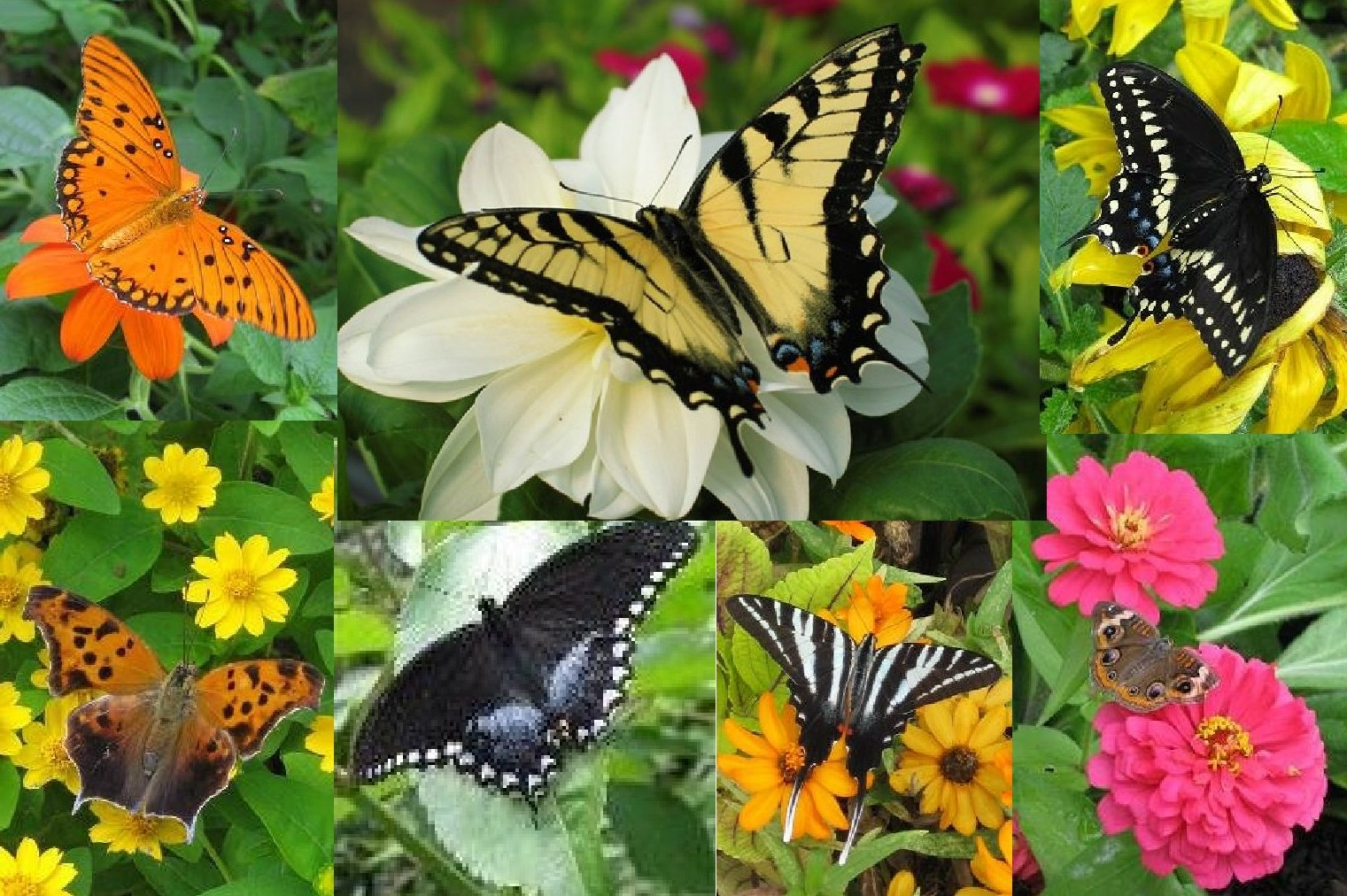 Wings And Waves Saving The Butterflies In Port Stanley Our Canada Project