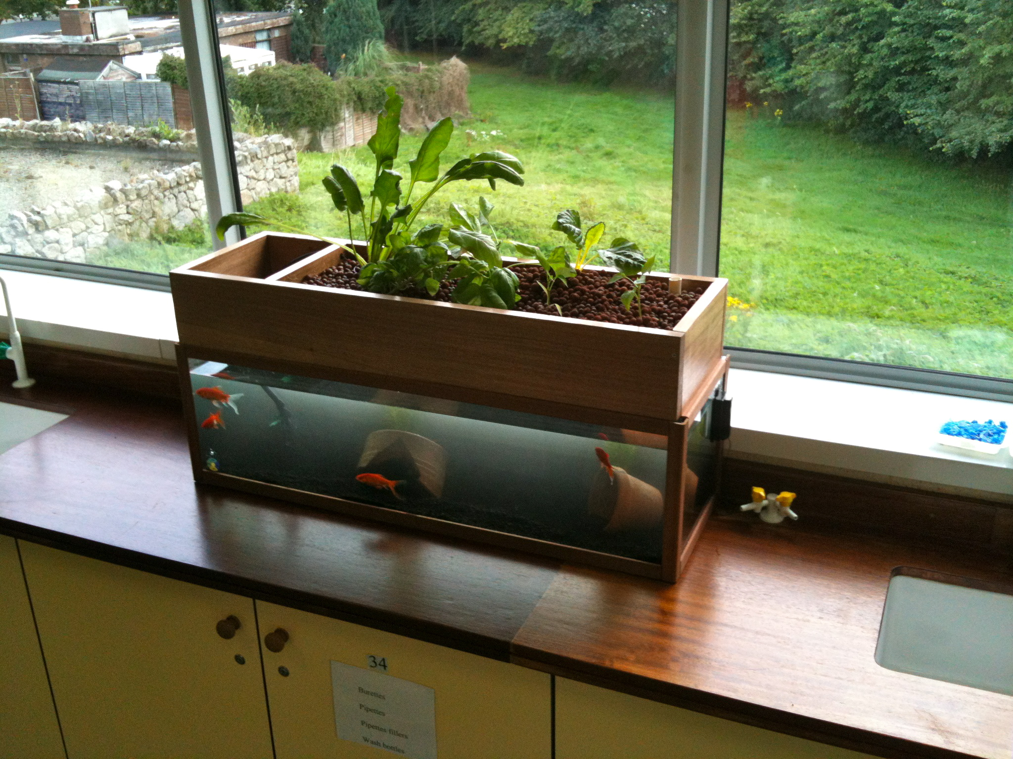 Lasalle secondary school classroom aquaponic project our for Aquaponics pond design