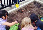Coulson Community Garden