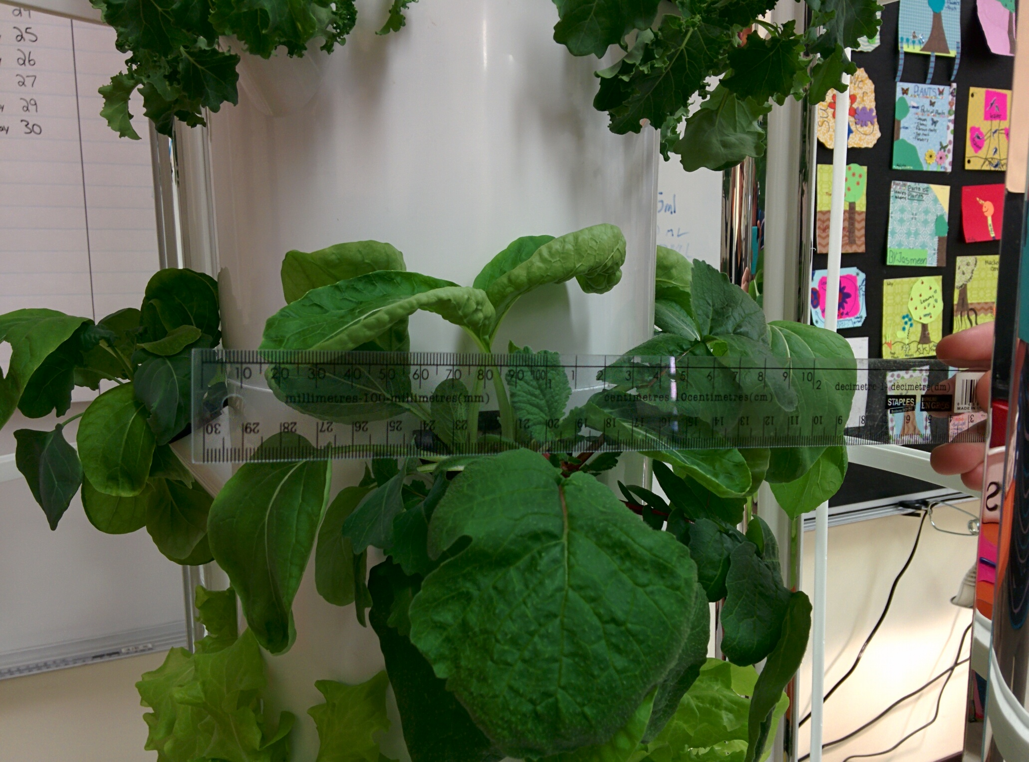 Aeroponic Versus Traditional Gardening Our Canada Project